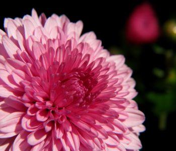 Welke behandeling krijg je bij borstkanker?