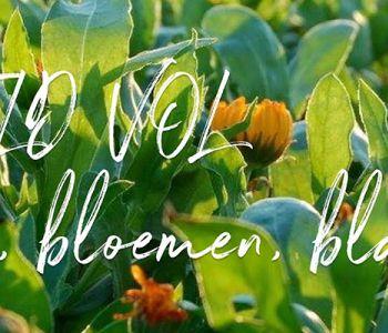Vlaams ondernemersbloed: Duizendblad