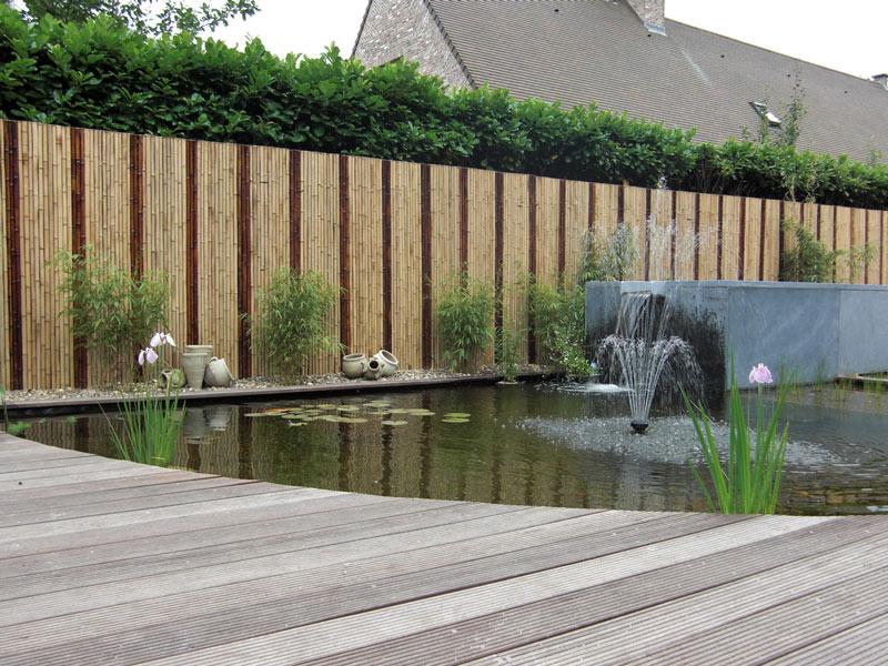 De tuindokter bekijk bamboe met andere ogen wist je dat for Moderne afsluiting tuin