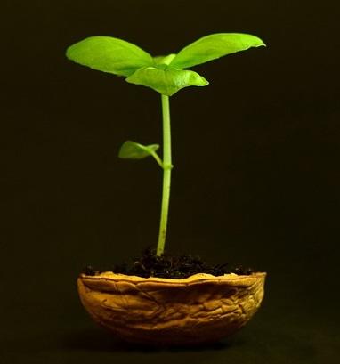 plant-3117525_640
