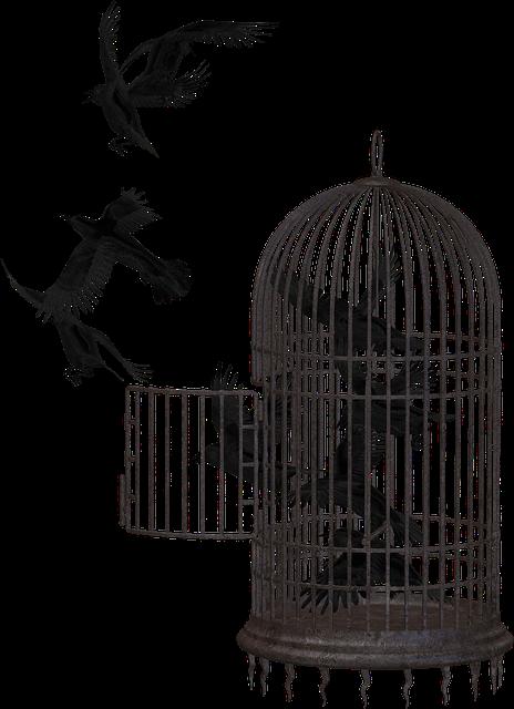 crow-2191180_640