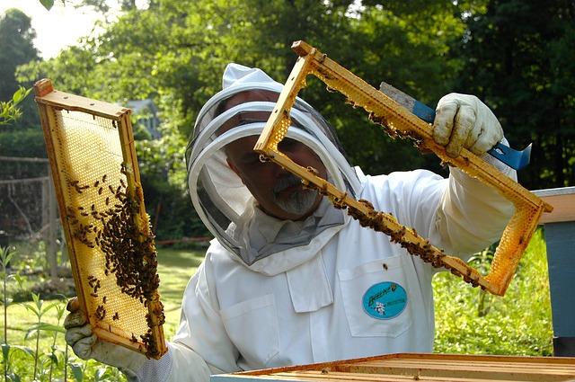beekeeper-682943_640