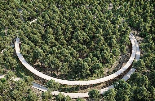 bosland-fietsen-tussen-bomen-3