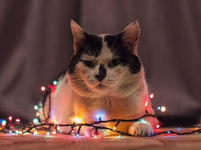 cat-3054820_640