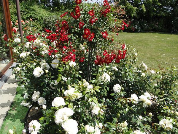Aanrader bezoek eens een rozentuin nu zijn de rozen op hun mooist