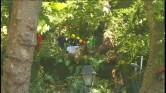 Boom valt op festival Madeira: 12 doden