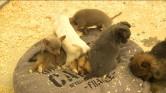 Eigenaars Puppy House vrijuit